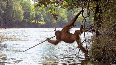 Photo of Kur'an'daki 'Aşağılık Maymunlar Olun!' İfadesi Ne Anlama Geliyor?