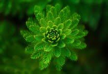 Photo of Simetri